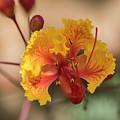 Summer Flower by Kevin McCollum