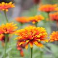 Summer Flower by Sam Teitelbaum