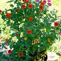 Summer Flowers 10 by Jeelan Clark
