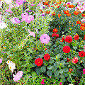 Summer Flowers 3 by Jeelan Clark