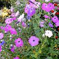 Summer Flowers 5 by Jeelan Clark