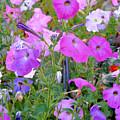 Summer Flowers 8 by Jeelan Clark