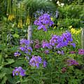 Summer Flowers by Dan MacKinnon