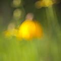Summer Flowers by David Wynia