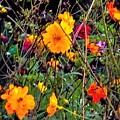 Summer Flowers by Debra Lynch