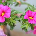 Summer Flowers by Linda Sannuti