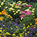Summer Flowers by Mary Ourada