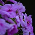 Summer Flowers by Matthew DiGiovanna