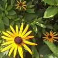 Summer Flowers by Sabina Trzebna