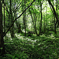 Summer Forest On A Sunny Day by Liudmila Gerasimova