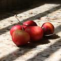 Summer Fruit by Sherry Klander