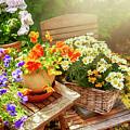 Summer Garden  by Ariadna De Raadt
