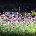 Summer Garden II by Lauren Radke