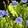 Summer Garden by Jen Saemann