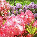 Summer Garden Pink Purple Rhododendrons Baslee by Baslee Troutman