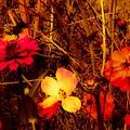 Summer Glow On Flowers by Debra Lynch