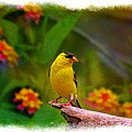 Summer Goldfinch by Debbie Portwood