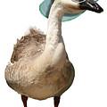 Summer Goose by Gravityx9  Designs