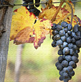 Summer Grapes by Sharon Foster