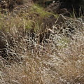 Summer Grasses by Colleen Cornelius