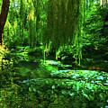 Garden Pond Of Summer Greeness by Ola Allen