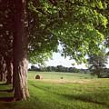 Summer Harvest by Kory Olson