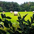 Summer Hay by Jennifer Kohler