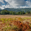 Summer In The Bald Hills 1 by Greg Nyquist