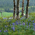 Summer In The Bighorns by MH Ramona Swift