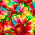 Summer Kaleidoscope  by Ola Allen