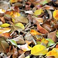 Summer Leaves For Fall by Diann Fisher