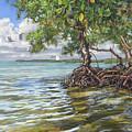 Summer Mangrove Melody by Carol McArdle