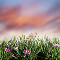 Summer Meadow Flowers In Grass At Sunset. by Michal Bednarek