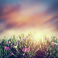 Summer Meadow Flowers In Grass At Sunset. Vintage by Michal Bednarek