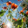 Summer Meadow by Victoria Savostianova