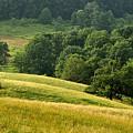 Summer Morning On The Farm by Thomas R Fletcher