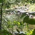 Summer Mountain Creek by Sharon Langdon
