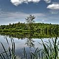 Summer On Waukeena Lake by Naturally NH