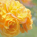 Golden Yellow Roses In The Garden by Jennie Marie Schell