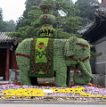 Summer Palace Elephant by Carol Groenen