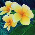 Summer Plumeria by Leslie Moore