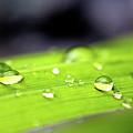 Summer Rain 2 by Victor K