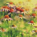 Summer Serenity by Pixabay