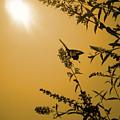 Summer Silhouette by Julia Raddatz