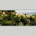 Summer Spledor by Tom Prendergast