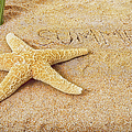 Summer Starfish by Marianne Campolongo