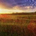 Summer Sunset - Waukesha Wisconsin  by Jennifer Rondinelli Reilly - Fine Art Photography