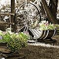 Summer Sweetness by Marilyn Hunt