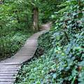 Summer Trail Path by Doug Ash