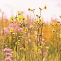 Summer Wildflower Field Of Sunflowers by Carol Mellema